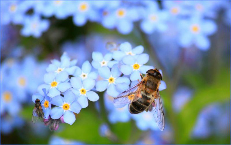 Insektenschutzmittel